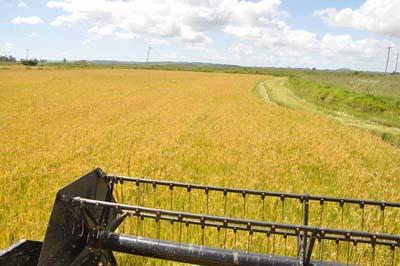 douglas arroz2.jpg