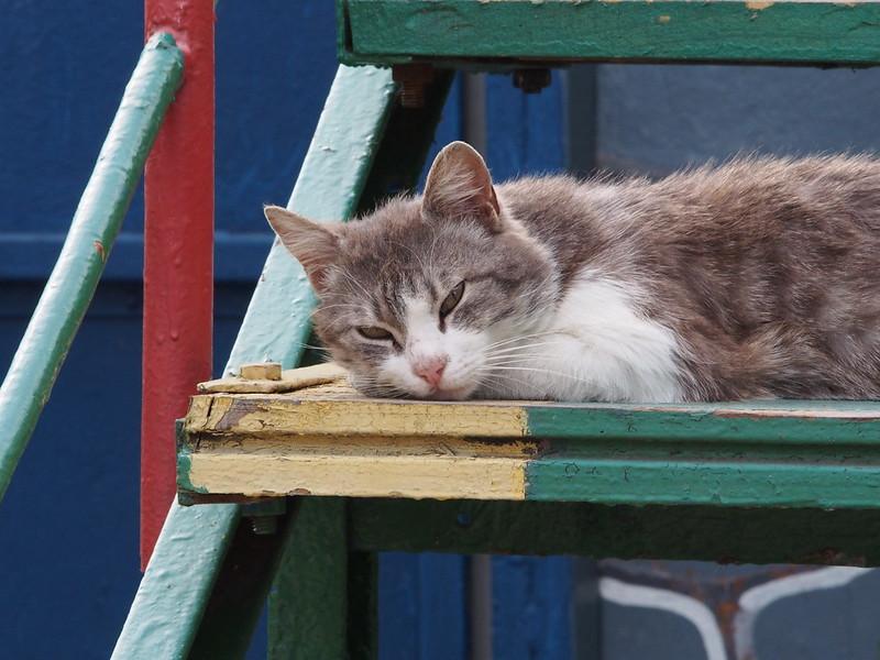 Cats of Sevastopol