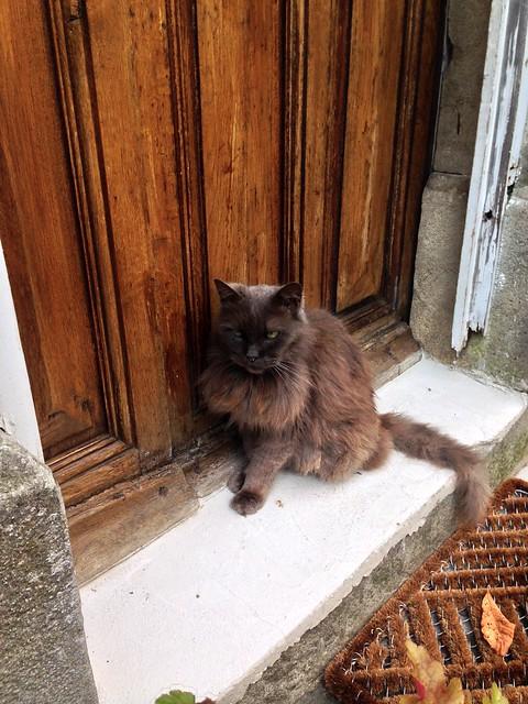 Cat in Montolieu