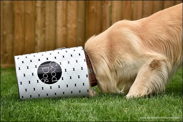 5-12 Bruno:  good dog 2.0