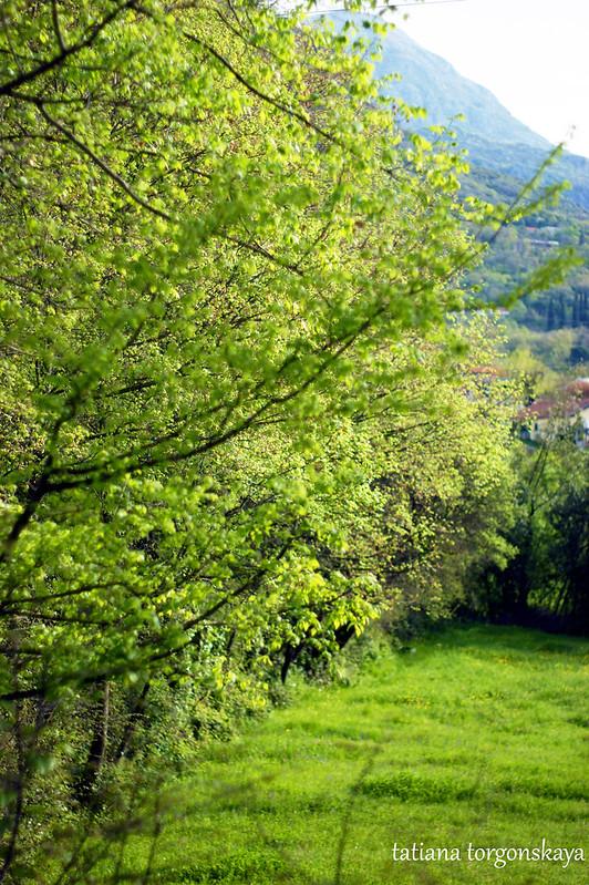 Апрельская зелень