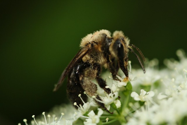 Almost good bee photos