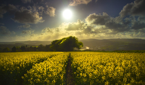 as we walk in fields of gold