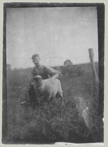 Tintype with sheep