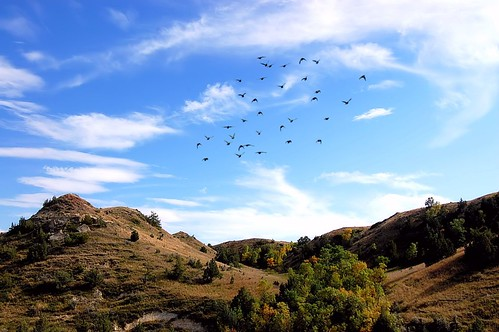 travel blue sky mountains green nature birds clouds forest landscape flying nationalpark nikon midwest earth wildlife hills