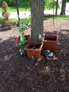 The Frog Garden