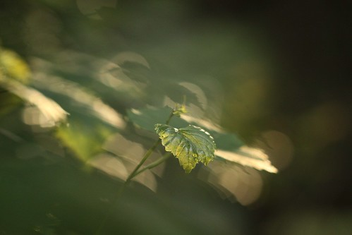 light/leaf