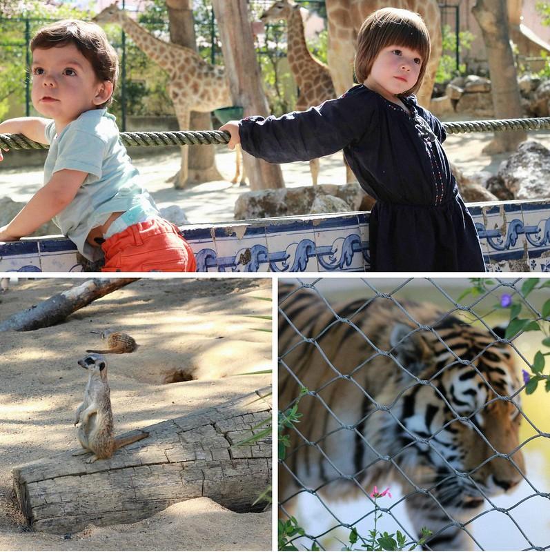 zoo final 3