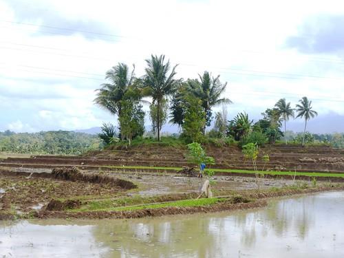 Sulawesi13-Bira-Bone-Kijang (19)