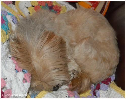 Bilbo-Sleeps-On