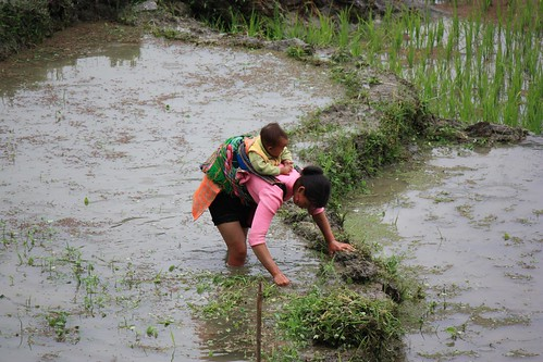 a mother with her child tends to a rice terrace