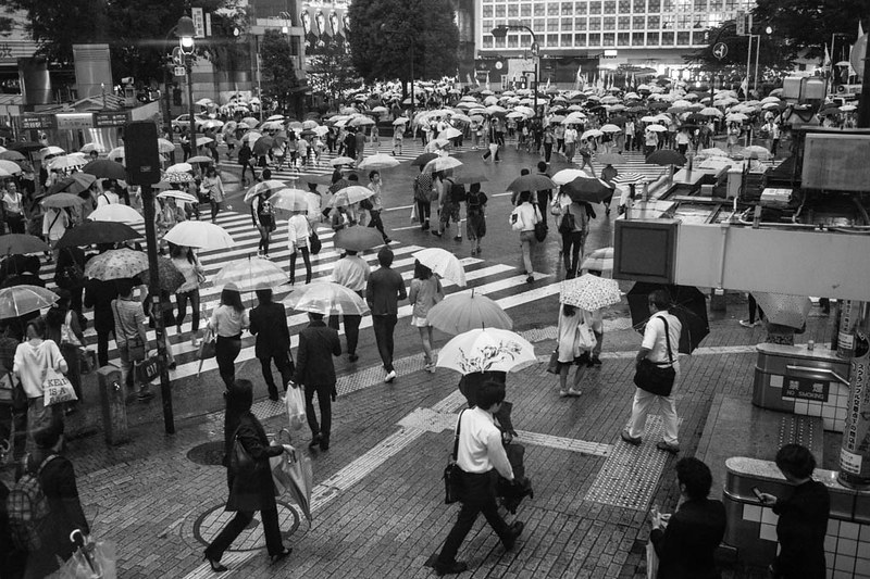 A canopy of umbrellas at Shibuya crossing.