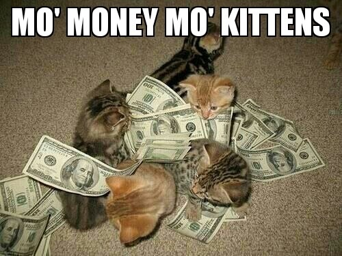 mo money mo kittens