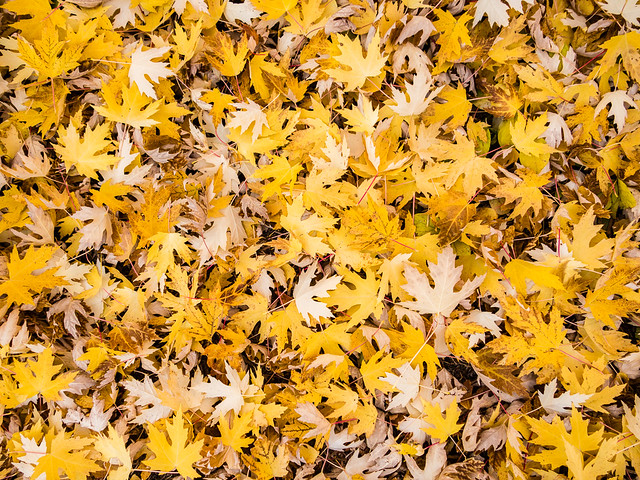 a carpet of leaves