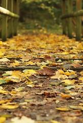 Farbenfroher Waldweg