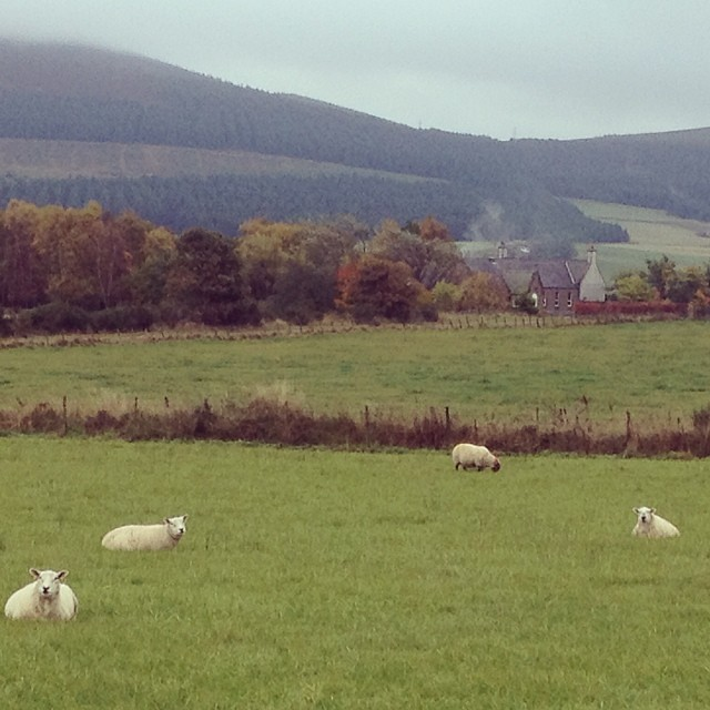Bye bye sleepy sheepies. Stay wirrim!