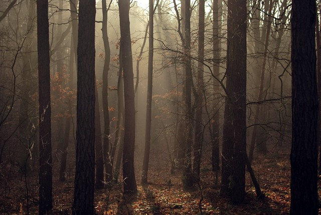 forbidden forest?