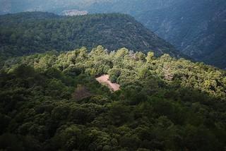 ·Cortando el Bosque·