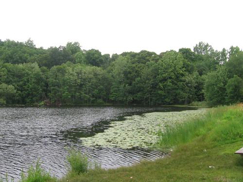 Pickett's Pond by Coyoty