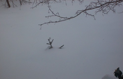 baby tree in ice