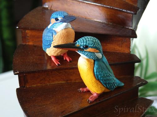 kingfishers3w