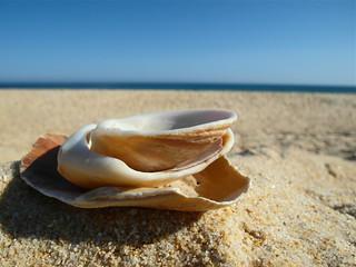 Seashells on Il Deserta, Faro