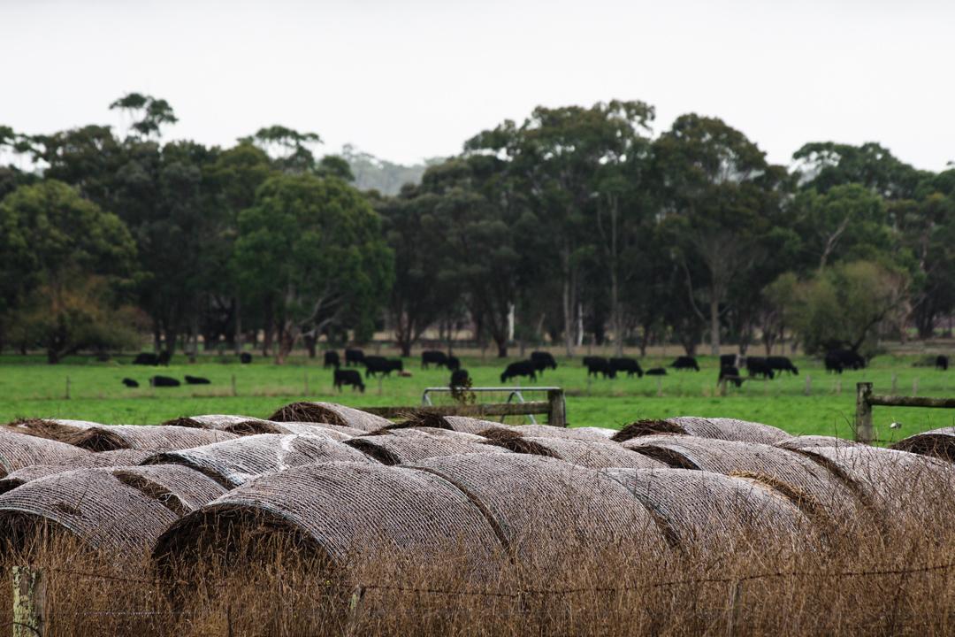 我在澳洲農舍的日子...
