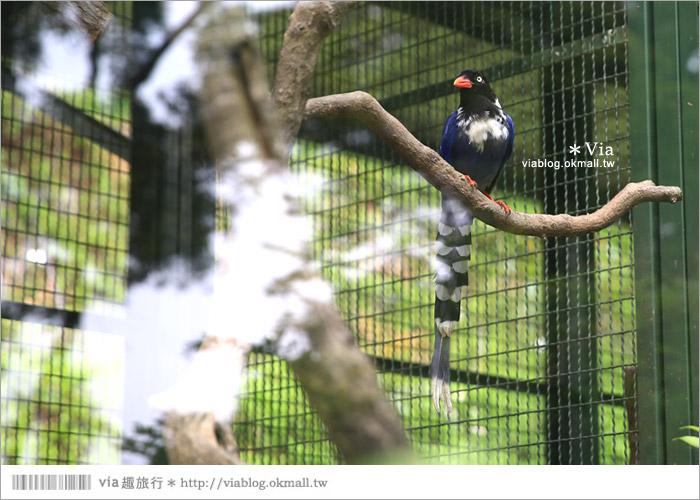 【新竹景點推薦】森林鳥花園~親子旅遊的好去處!在森林裡鳥兒與孩子們的樂園32