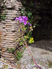 Flower growing in the ruins
