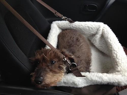 The Dog Box (Solvit Tagalong Booster Seat) - Liberty London