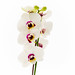 20150127 White Orchid-18-2