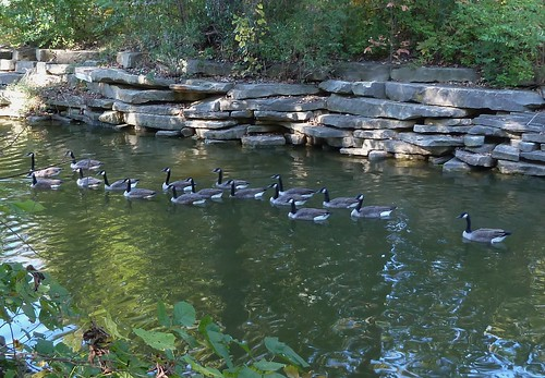 nature water fauna landscape pond limestone canadageese wheatonil herricklakeforestpreserve