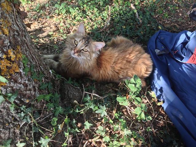Saissac Camp Cat