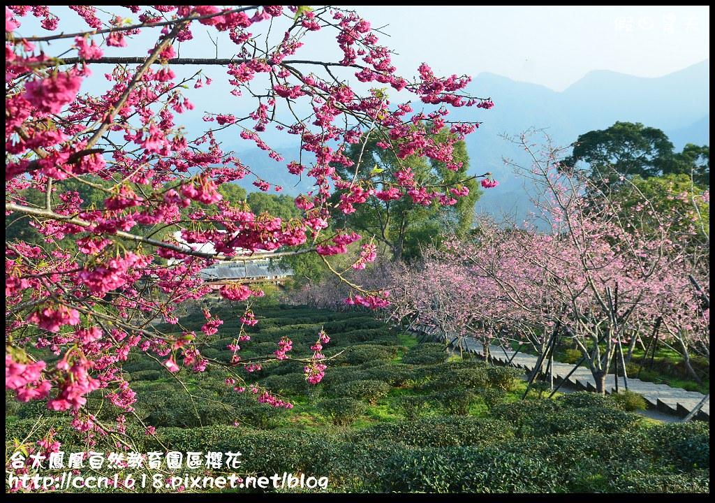 台大鳳凰自然教育園區櫻花DSC_5910