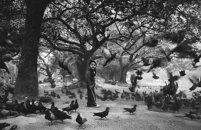 a boy blown by the pigeons when he entered into a group of them...