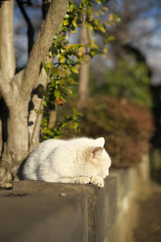 東京路地裏散歩 谷中・日暮里 2015年2月19日
