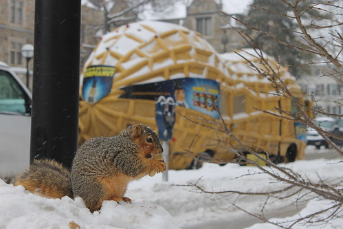 238/365/2429 (February 4, 2015) - Squirrels on a Snowy Winter's Day at the University of Michigan (February 4, 2015)