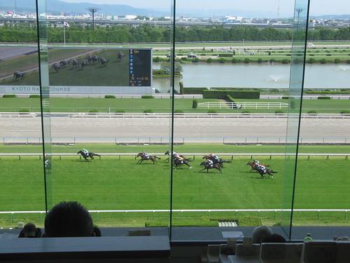 京都競馬場の指定席から見た馬場