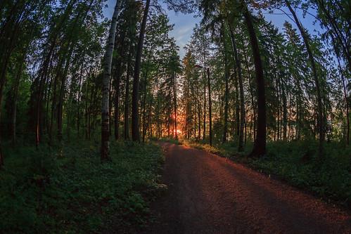 sunset sun tree forest espoo finland prime evening twilight sundown path fisheye trail puu 15mm metsä ilta kesä auringonlasku aurinko uusimaa polku laaksolahti