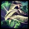 Pandora sphinx moth.