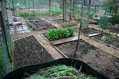 spring garden plot 019