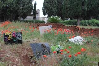 cimitero turi