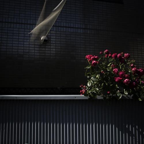 Bushy Flowers with Skewed Wall