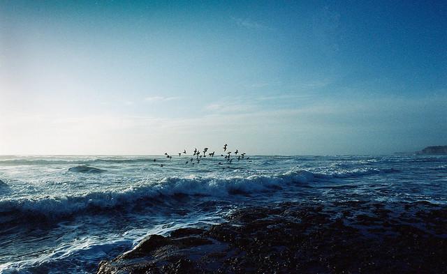 Tunitas Flock