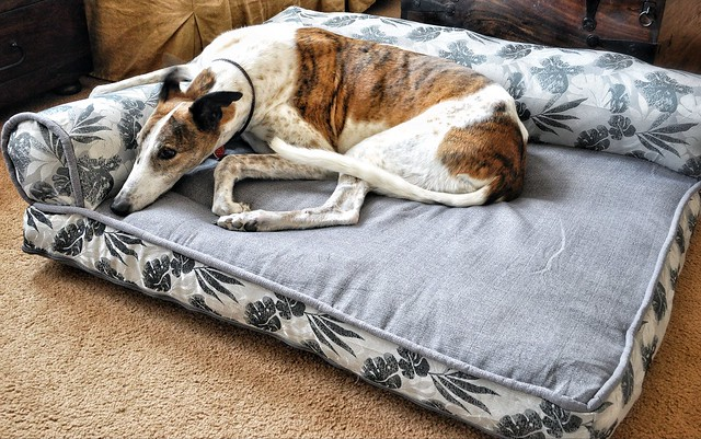 bolster beds at costco - everything else greyhound - greytalk