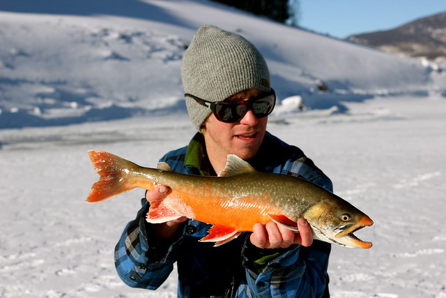 Arctic char fisheries research at dillon reservoir for Dillon reservoir fishing