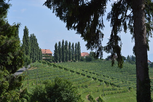Vineyards of Jeruzalem