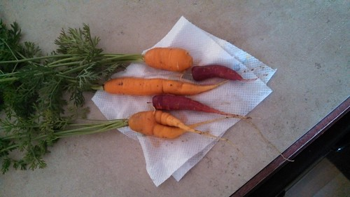 Carrots we grew