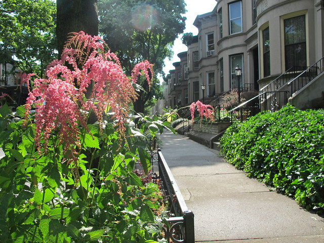 Maple Street between Bedford and Rogers Avenues, Lefferts Manor