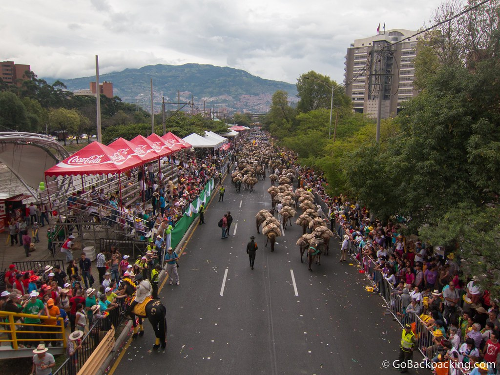 A view north shows the tail end of the parade, featuring donkeys